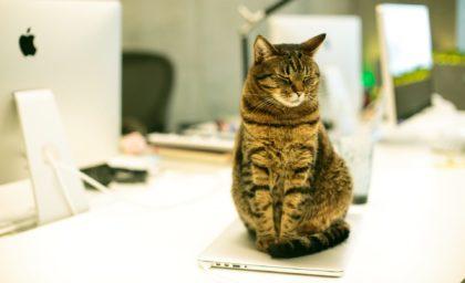 Coworking spaces pet-friendly: pro e contro